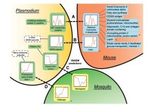 Gene interaction predictions between Plasmodium, its mammalian host and insect vector. Credit: doi:10.1093/nar/gks1340