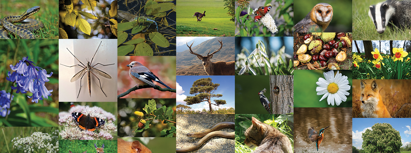 The Darwin Tree of Life Project and the Earth BioGenome Project are aiming to sequence all animals, birds, fish, insects and plants in the UK and on earth, respectively