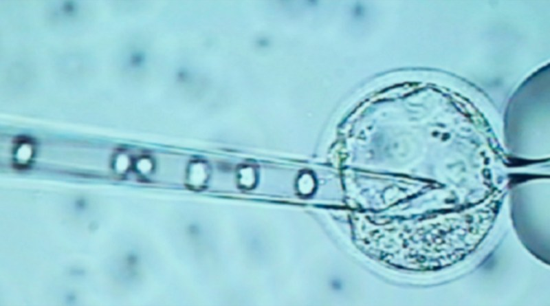 Human Embryo Editing: science fiction or science fact?