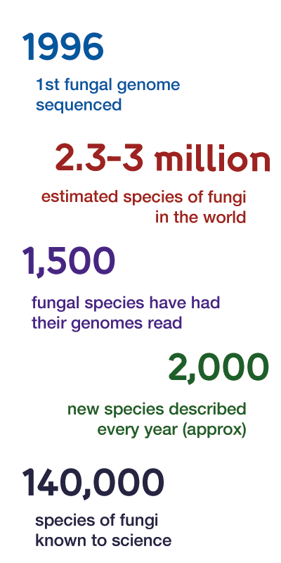 Fungal Facts