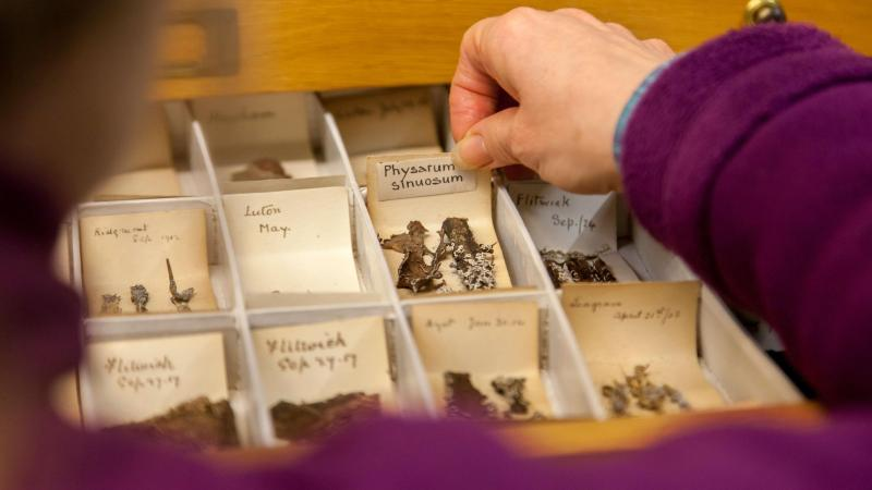 With samples dating back to 1879, the Fungarium's collection contains an estimated 375,000 specimens from the UK. Image credit: The Royal Botanic Gardens, Kew