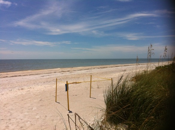 At the Fulgar St beach access looking west over a turtle nesting area 09-14-12