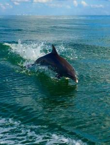 Dolphin 11-6-15