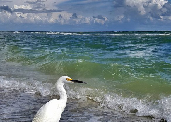 09-13-16 Beach bird.jpg
