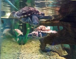 2016-09-22-turtles