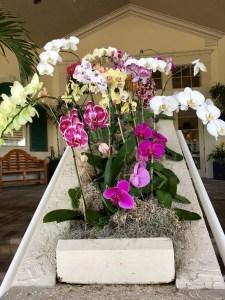 Sanctuary orchids
