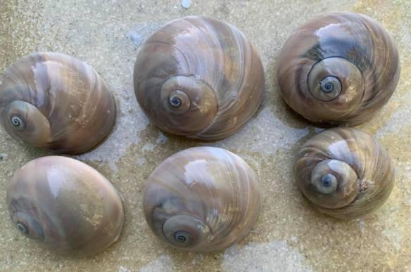 marci canty sanibel shell seekers