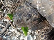 TurtleEating