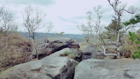 Vegetation auf dem Gipfel