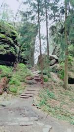 Der leichte Abstieg beginnt in bewaldeten Gebiet