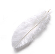 The kiss of the white feather