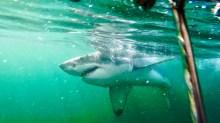 Shark Diving!