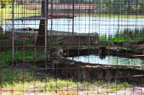 Big Cat Rescue pools