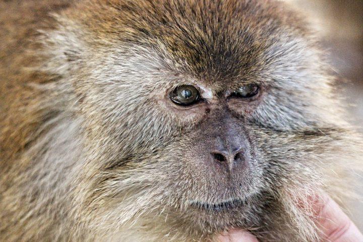 Suncoast Primate Sanctuary Mugsy