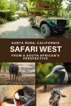 Safari West Pinterest