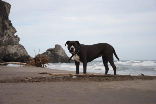 Perro Playa de Barronal, San Jose, Almeria