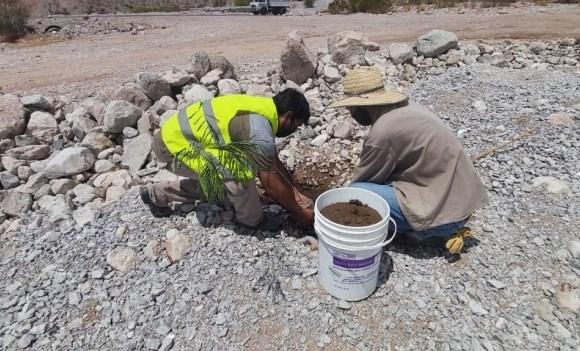 Trabajadores municipales plantaron árboles en Anchipurac