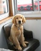 bob puppy
