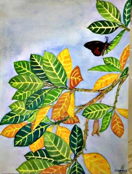 Ficus Septica (Hauili Fig Tree), Swallowtail Butterfly