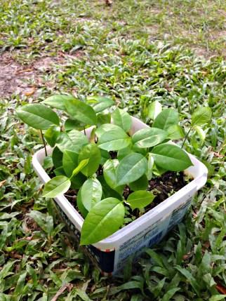 Sankie's Plant 2