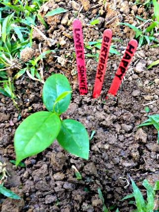 Sankie's Plant