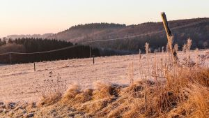 2021_01_02_REGION_Winter in der Eifel_21_1024Px