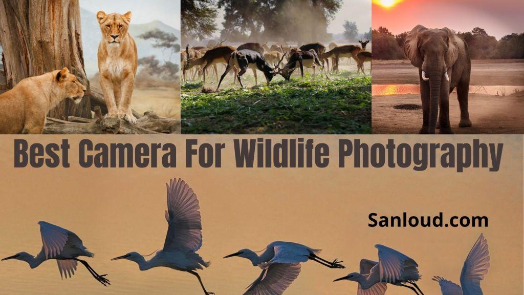 best dslr camera for wildlife photography