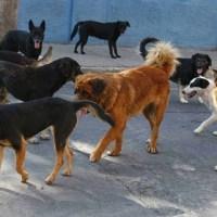 Jornada Nacional de Vacunación Antirrábica Canina y Felina 2020