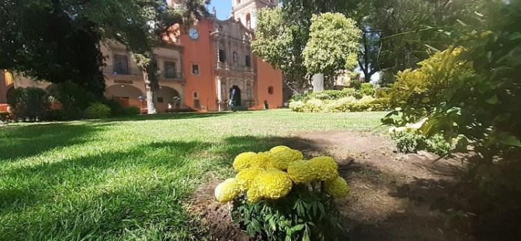 Gobierno Municipal disminuye fauna nociva en jardines y plazas del Centro Histórico