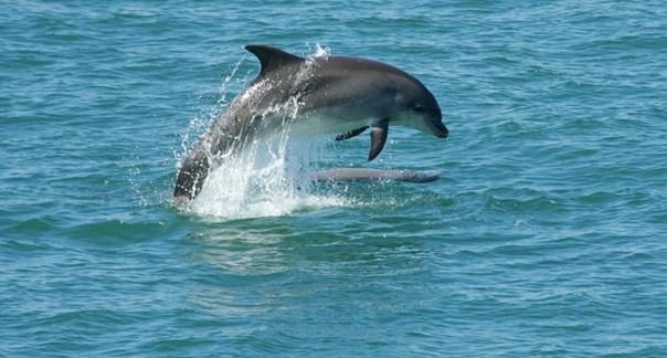 Explican la razón del vídeo que causó indignación donde aparentemente un hombre abusaba de un delfín