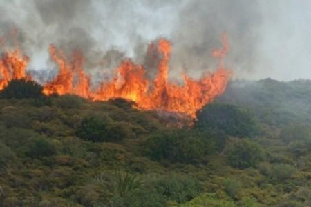 Afectan a SLP Incendios Forestales este viernes se presentaron hasta 40 incendios de manera simultánea