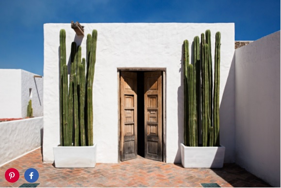 Towering Mexican Fence Post cacti frame a doorway.