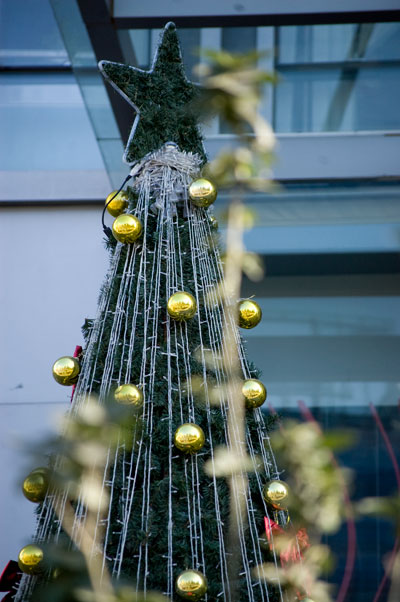 Christmastree outside building