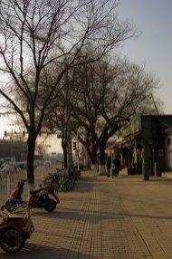 zhangzizhonglu.backwards