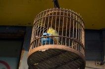 zhangzizhonglu.bird2