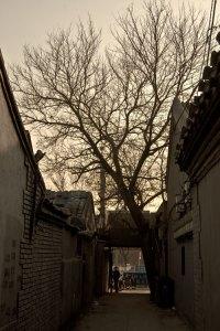 zhangzizhonglu_bostadsomradet8
