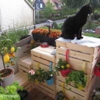 Zuhause & Co: Die Katzentreppe mit vertikalen Garten