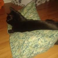 Nähen: Kissen für die Katz
