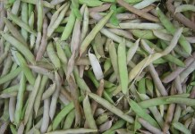 Боб (фасул) бял Phaseolus vulgaris L.