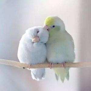 Сънища за птици