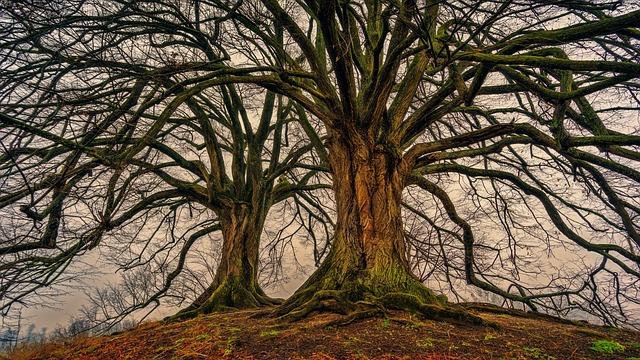 Дърво - Фън Шуй