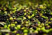 Костилките на маслините