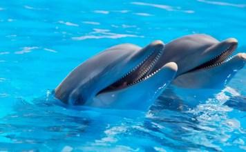 Делфини с нежни имена
