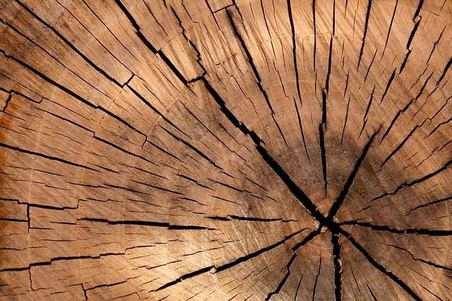 Най-разпространените суеверия - Да почукаш на дърво