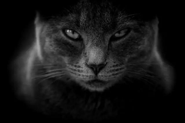 Най-разпространените суеверия - Черна коткада ти пресече пътя