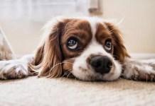 Кучешки физиономии точно преди да хванат наградка