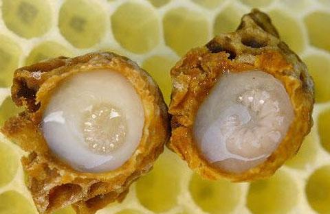Tác dụng của sữa ong chúa với làn da và sức khỏe 1
