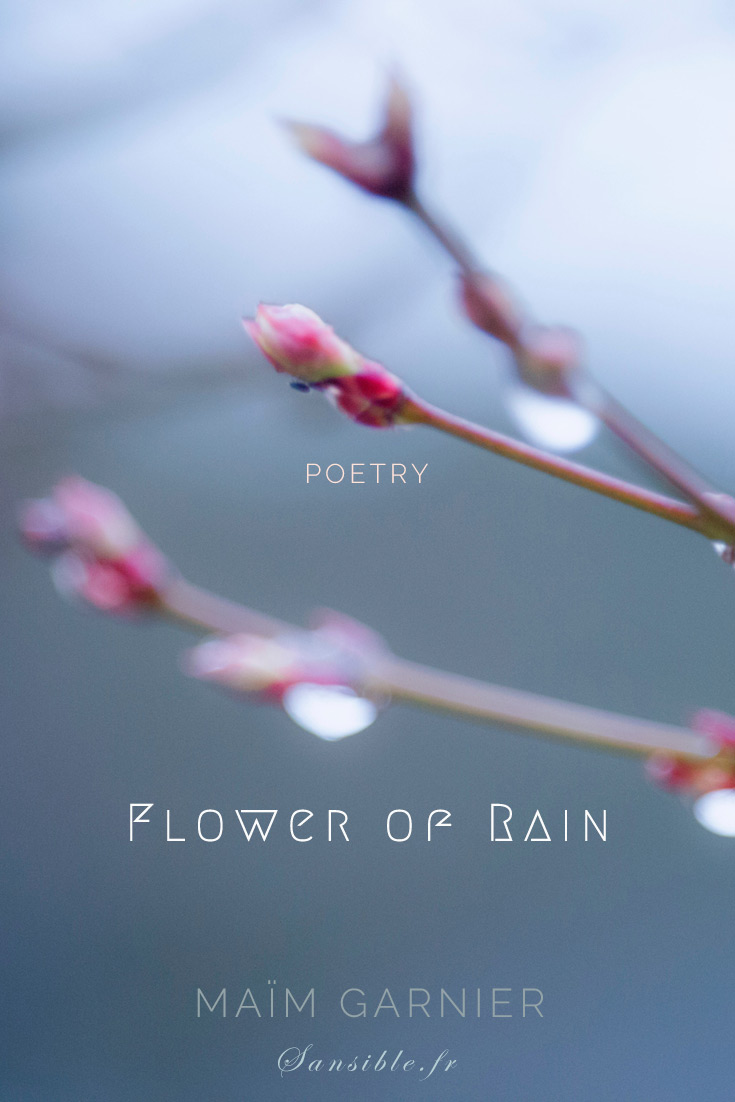 Flower of rain is a haiku poem by Maïm Garnier. Capture happiness in the Now.  Find more poems and texts to read on Sansible. #MaimGarnier #sansible #spring #poetry #literature #littlehappiness #blessings #happinessinspiration #haiku
