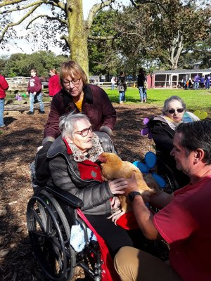 friendly chickens at Walk to End Alzheimer's
