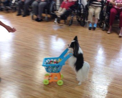Nursing Home Week 2019 - dog therapy - 1